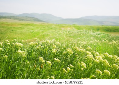 Green pasture in the mountains with lush grass