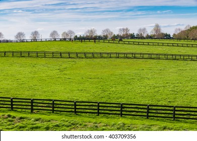 Green pastures of horse farms. Countryside spring landscape.