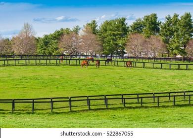 Green pastures of horse farms. Countryside spring landscape. Kentucky. USA