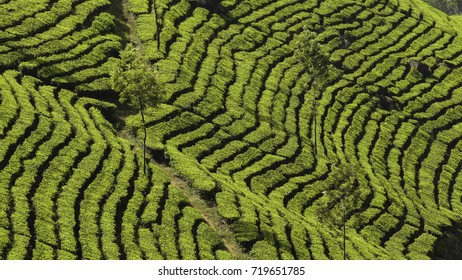 Green patterned terraces of tea plantations in the hills of Munnar, Kerala, India