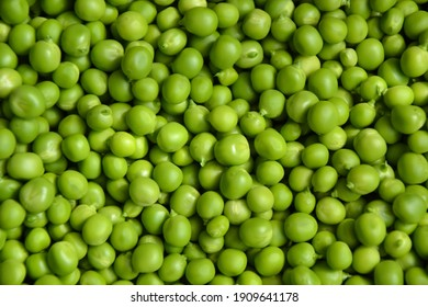 Green pea background. Pea pods from farmland. Pea freshly picked. Organic fresh vegetables. Healthy eating. Country garden harvest.
