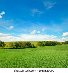 Green pea field and blue sky with light clouds.