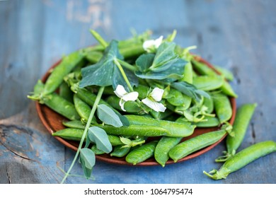 Green pea in plate on rustic wooden background