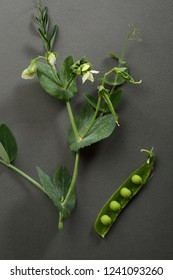 Green peas on gray background