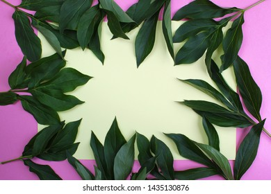 green peony leaves laid out in the shape of a frame