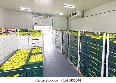 Green Peppers in Boxes Cold Storage Warehouse