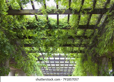 Green pergola in Park, Wroclaw, Poland.