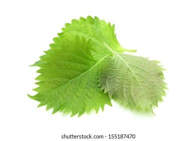 Green Perilla