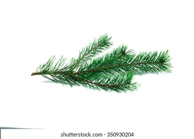 Green pine branch on isolated white backgroung.