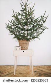 Green Pine, Christmas tree and wooden calendar with 31 December date on it. A green fir tree on a white background