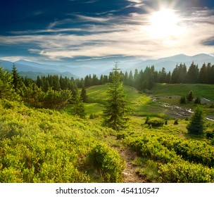 Green pine forest and meadow in the mountains at sunset sky background