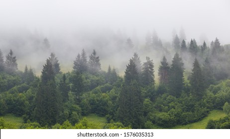 green pine forest on a mount slope in a dense fog, wide outdoor background