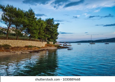 Green pine on the seashore at Stara Novalja on the island of Pag in summer, Croatia