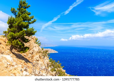 Green pine tree on high cliffs above sea on Karpathos island, Greece