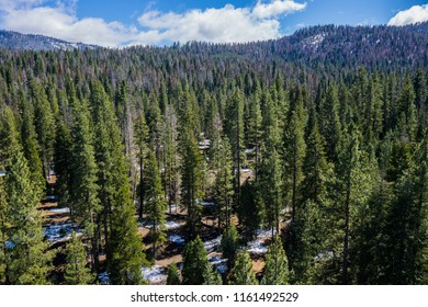 Green pine trees and forested hills in the Sierra Nevada mountains of central California.