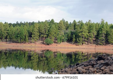 Green pine trees reflected in Dogtown Lake, Arizona with pile of rocks in foreground, and blue skies in background.
