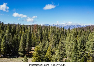 Green pine trees and tall mountains covered in snow for spring time in the Sierra Nevadas of California.