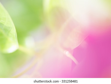 Green and Pink Abstract