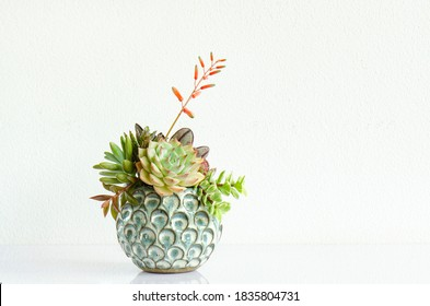 Green and pink echeveria sedum succulent plant centerpiece arrangement in blue ceramic container on  white table top white concrete wall background