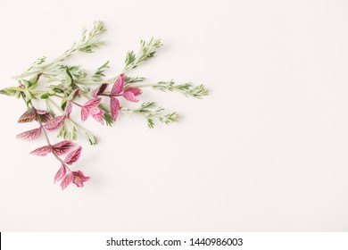 green and pink plants on white  background
