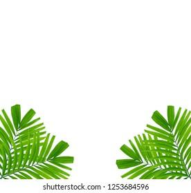 Green plam leaf frame isolated on white background