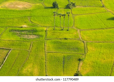 Green plant in Angkor Wat