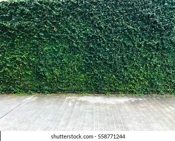 Green Plant Background and concrete floor