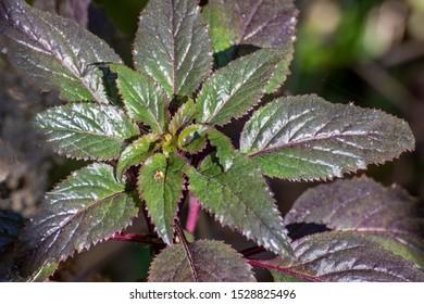 Green plant bramble at half morning.
