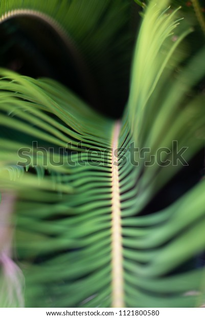 Green Plant Close-up