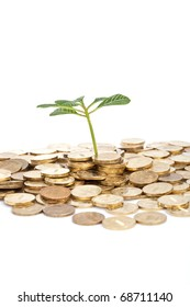 green plant and coins isolated on white
