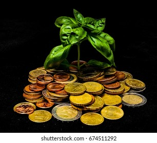 Green Plant and Coins on a Black Background