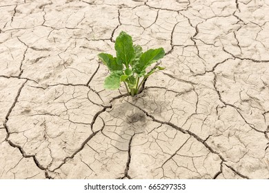 Green plant in dried cracked earth in summer