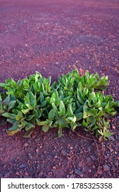 Green plant in dry ground. Barren soil. Drought concept. Dry ground texture. Barren soil. Drought concept.