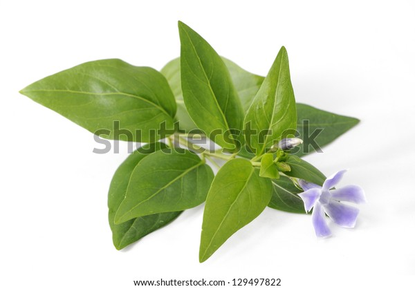 green plant and flower
