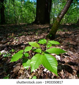 Green plant in forest wideangle