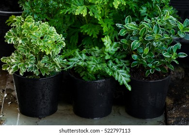 Green plant garden