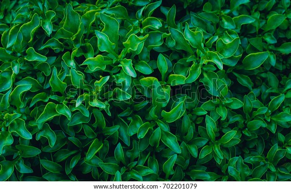 Green plant in garden and blur background, flash condition