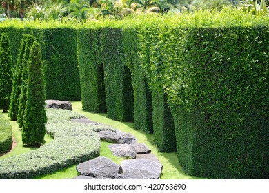 Green plant garden in the Park.
