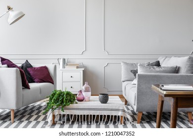 Green plant, glass vases and doted coffee mug on the coffee table in scandinavian living room with bright grey wall with molding and copy space