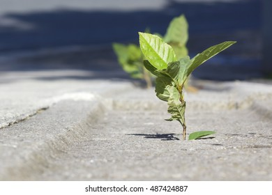 Green plant growing in concrete sidewalk.