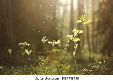 Green plant growing in the forest with magical sunlight