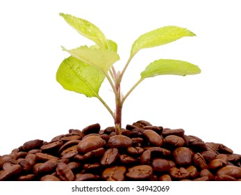 Green plant growing on a coffee beans against a white background