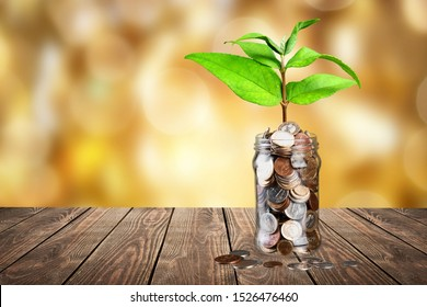 green plant growing on golden coin in glass jar on wood table in park with blur nature background. business financial banking saving concept. investment profit income. marketing startup success.