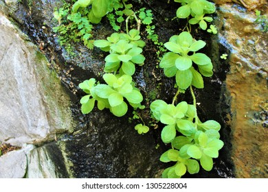 Green plant growing on side of wet rock