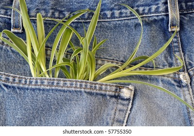 Green plant growing out of jeans pocket