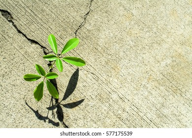 Green Plant Growing Out Of Sidewalk Crack