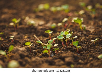 Green plant growing from seed in organic soil