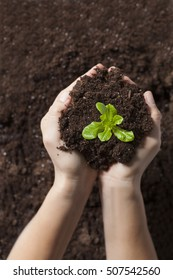 Green plant is growing up with soil in a woman hand