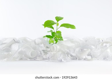 Green plant growing in a white trash consisting of bottles, paper, plastic bags and utensils. Performance of the whole composition on a white background. Composition made on white background.