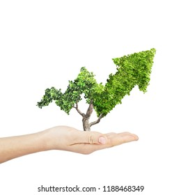 Green plant grows up in arrow shape in hand over white background. Concept business image